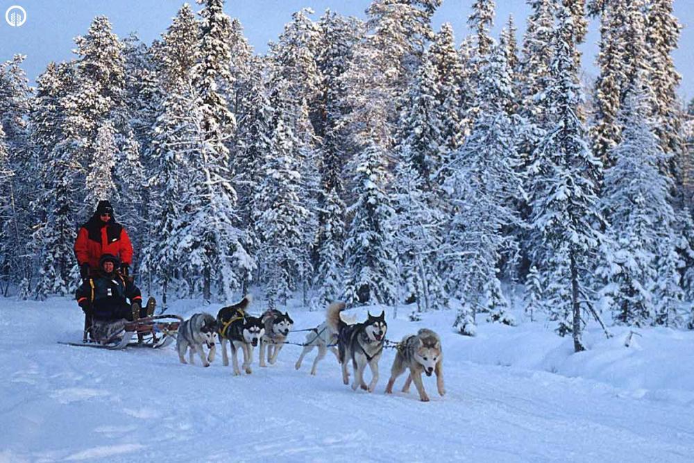 Kutyaszán - Hópehely Túra - 2.
