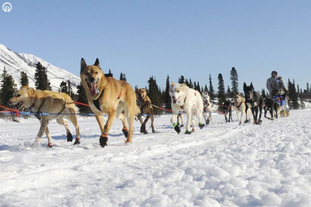 Kutyaszán - Hópehely Túra - 3.